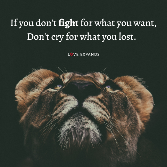 "Picture quote of a tiger looking up at thext that says, ""If you don't fight for what you want, Don't cry for what you lost."""