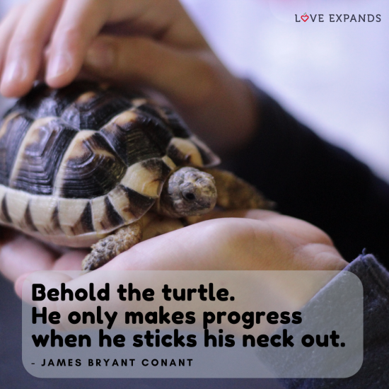 "Picture quote of a baby turtle in someone's hand. ""Behold the turtle. He only makes progress when he sticks his neck out."" by James Bryant Conant"